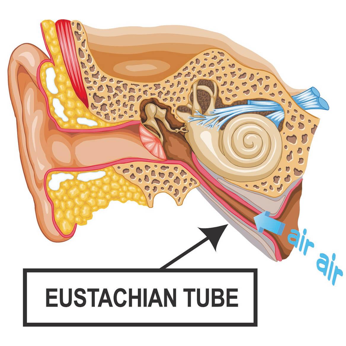 Eustachi  Eustachian Tube Exerciser-355090
